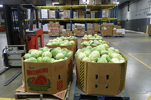 boxes of cabbage - Give Food