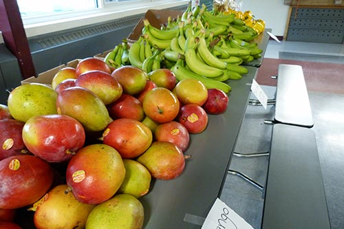 SNAP helps New Yorkers buy food